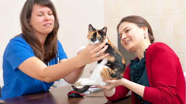 Why Bother Insuring Your Pet?