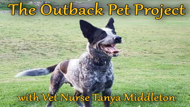 Outback Pet Project