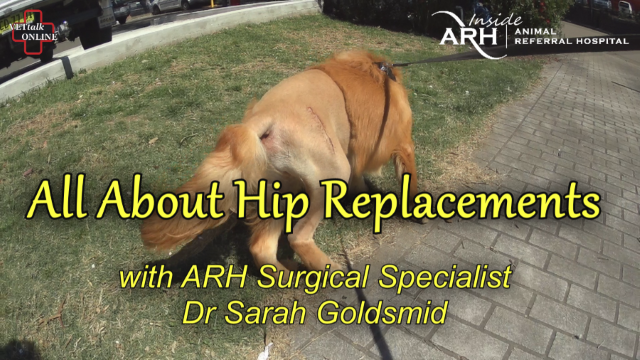 All About Total Hip Replacement